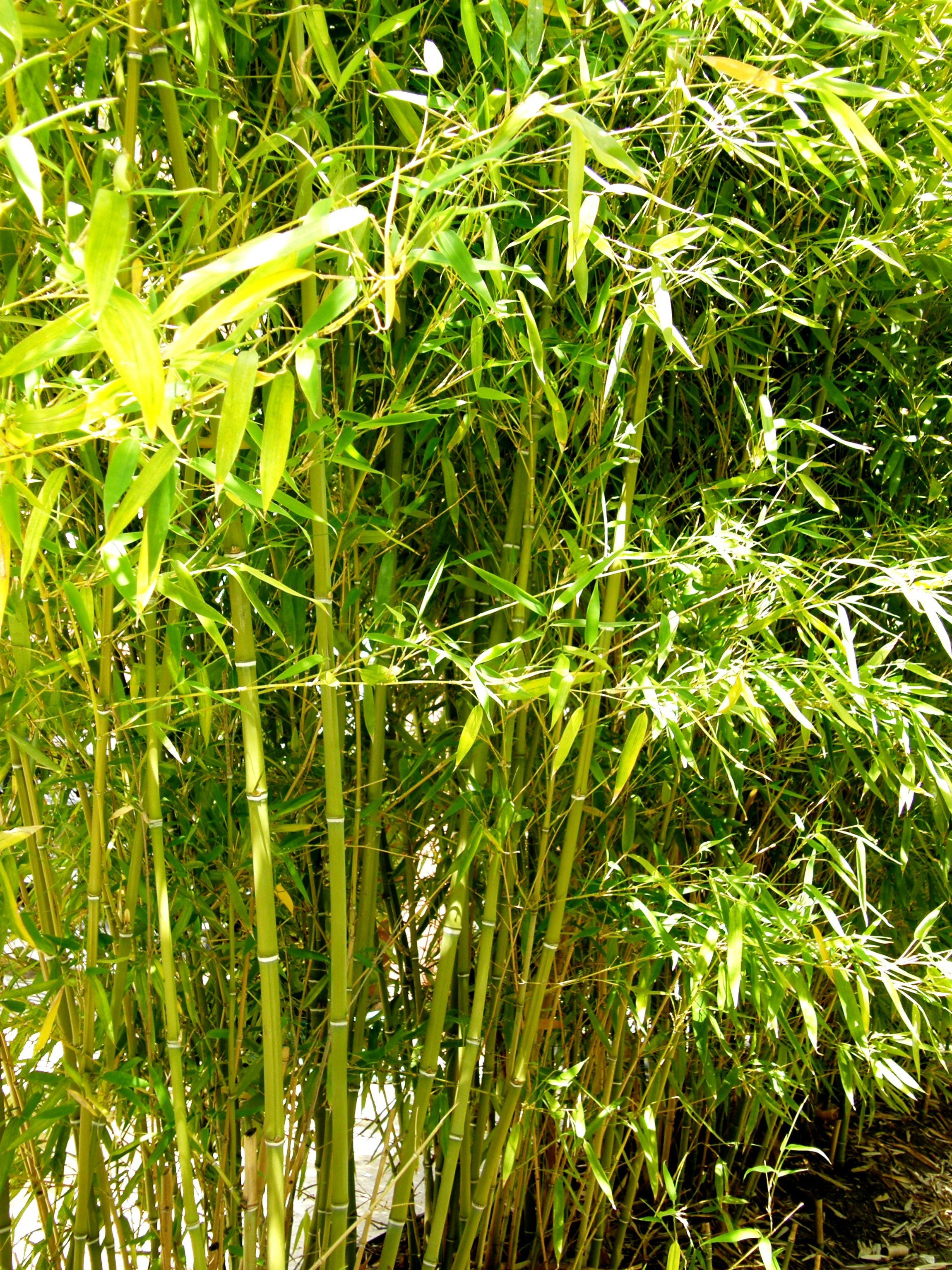 Artificial Bamboo Plants