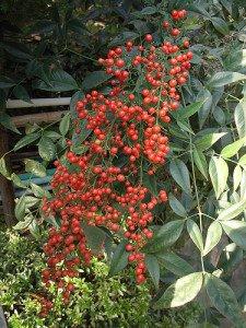 Apna Plants