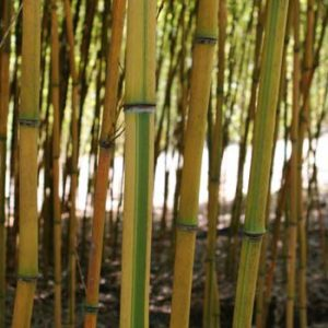 Unique Screening Bamboo